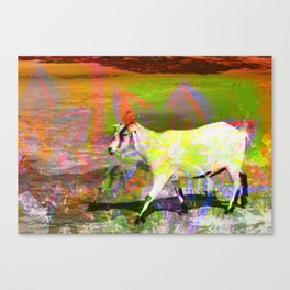 goat flower Canvas Print