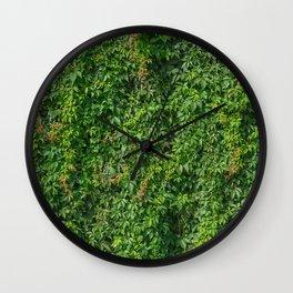Green vines climbing brick wall plants natural texture Wall Clock
