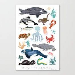 Sea Change: Ocean Animals Canvas Print