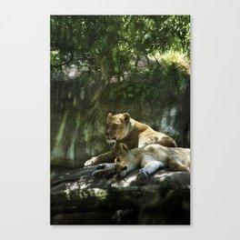 Portland Lioness Canvas Print