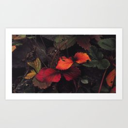 The Nature of Fire 2 Art Print