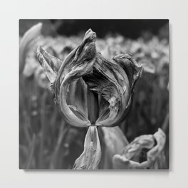 'Dying Tulip' Metal Print