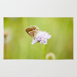 Butterfly on a flower Rug