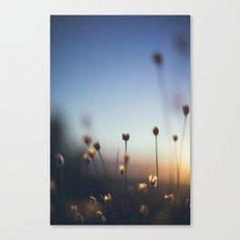 Susnet Plant Canvas Print