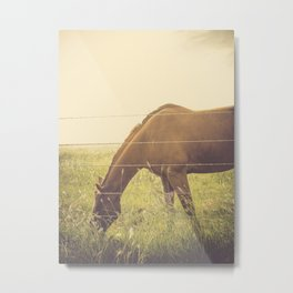 Texas Horse Grazing Metal Print