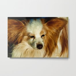 Papillon Beauty  - Dog Breed Metal Print
