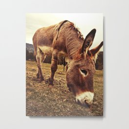Donkey In The Field Metal Print