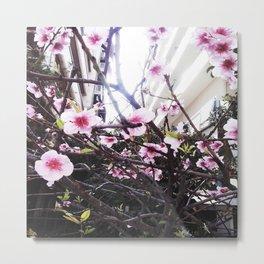 Αlmond tree Metal Print