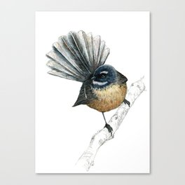 Mr Pīwakawaka, New Zealand native bird fantail Canvas Print