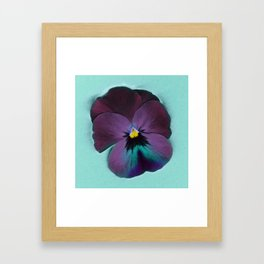 Purple viola tricolor Framed Art Print