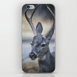 Buck with Two Pronged Antlers iPhone Skin