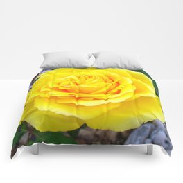 Golden Yellow Rose with Garden Background Comforters