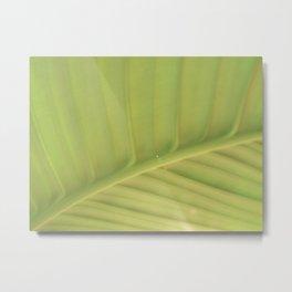 Leaf Arc, light Metal Print