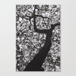 Under the raintree Canvas Print