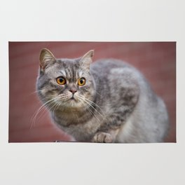 British shorthair cat on the wall Rug