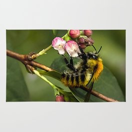 Photograph of a bee collecting nectar in a local park Rug