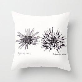 Tropical Sea Urchin Pen & Ink Throw Pillow