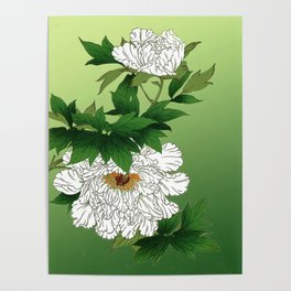 Vintage Japanese Sketch of Large White Peony Poster