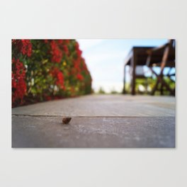 Solitary Shell Canvas Print