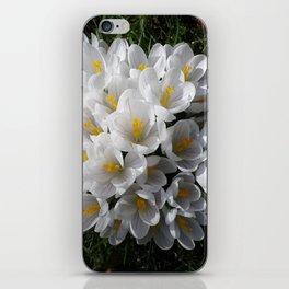WHITE SPRING CROCUSES iPhone Skin