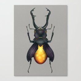 Amber Beetle Canvas Print