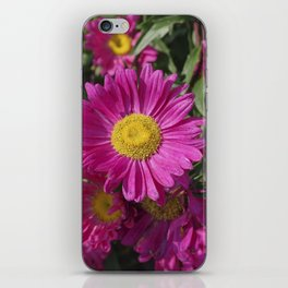 Summer Asters 4636 iPhone Skin