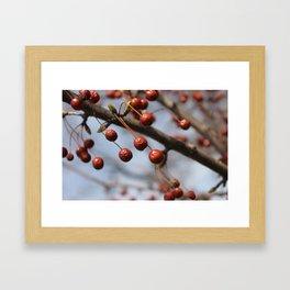 Berries of Winter Framed Art Print