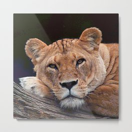 AnimalPaint_Lion_20171201_by_JAMColorsSpecial Metal Print