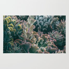 Mornings In The Succulent Garden #1 Rug