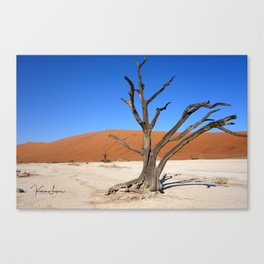 Skeleton tree in Namibia Canvas Print
