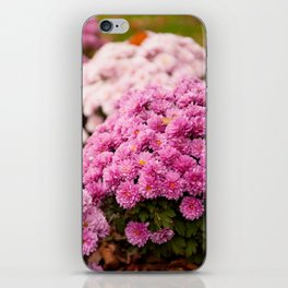 Many pink Dendranthema flowers iPhone Skin