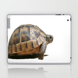 Sideview of A Walking Turkish Tortoise Isolated Laptop & iPad Skin