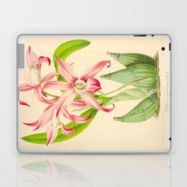 LAELIA AUTUMNALIS Vintage Botanical Floral Flower Plant Scientific Illustration Laptop & iPad Skin