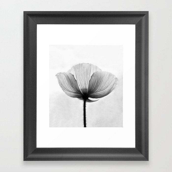 XRAY FLOWER [transparent black white poppy petals] Framed Art Print ...