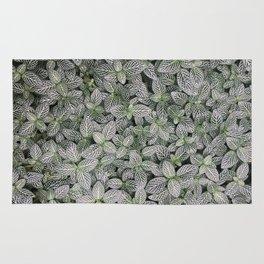 Fittonia albivenis Rug