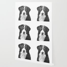 Black and White Bernese Mountain Dog Wallpaper