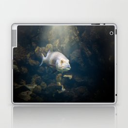 A Fish Laptop & iPad Skin