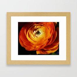 Introspective buttercup beauty Framed Art Print