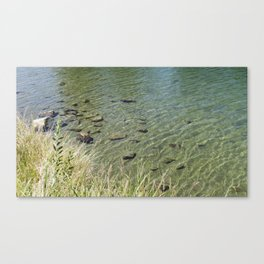 The Calm Along the River Canvas Print