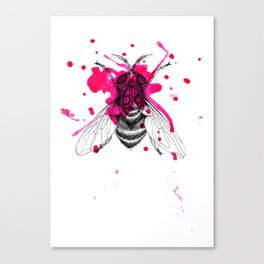 Squashed fly Canvas Print