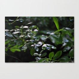 Buisson Canvas Print