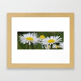 Daisys Framed Art Print