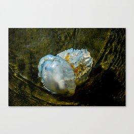 Jellyfish Canvas Print