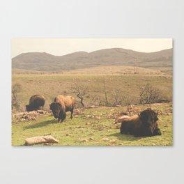 Grazing Canvas Print
