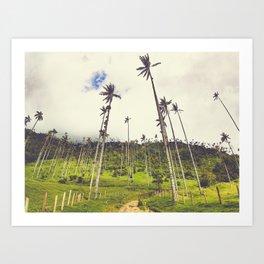 Wax Palms Tower over Cocora Valley Fine Art Print Art Print