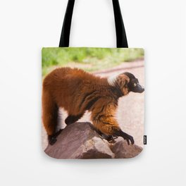 Varecia Rubra Tote Bag