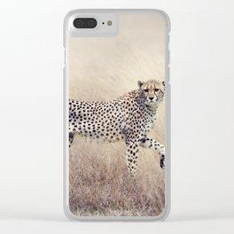 Cheetah on the savannah Clear iPhone Case