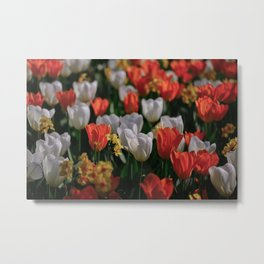Colorful White and Orange Tulip Carpet Metal Print