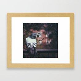 Pigeon of Barcelona Framed Art Print