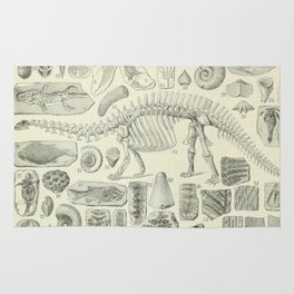 Fossil Chart Rug